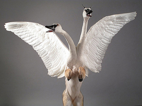 Amazing hybrid taxidermy by Gomez de Molina. From Trendland:  During Miami Art last week I discovered the fascinating sculptures of Enrique Gomez de Molina.  Using the parts of once-living animals, de Molina hopes to bring  awareness to the danger faced by a multitude of species: nuclear and  chemical waste, over development and deforestation, to name a few.  Genetic engineering and human intervention also accounts for the  conceptualization of these surreal pieces. Enrique de Molina puts into question the possibilities artificial evolution that the future holds.  (Image via Trendland)