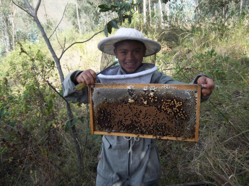 """There is a lot of good that will come out of the beekeeping project. My hope is that families in town will start to eat and buy honey instead of white sugar for the additional health benefits that honey provides. Working in a group will allow cooperative members to collaborate and exchange advice, as well as sell honey in bulk to larger organizations.""  - Peace Corps Volunteer Elizabeth Clark, who started a beekeeping cooperative with 18 local families in rural Ecuador. The honey generated by the bees will be sold to local stores and provide an income for local families. The project is funded through the Peace Corps Partnership Program  (PCPP), which raises money for Peace Corps volunteer community projects."