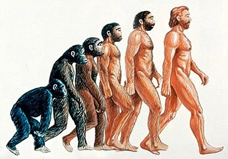 "Alright, friends, let's talk about evolution. FIRSTLY, I MUST SAY THIS, AND I MUST SAY IT IN BOLD AND CAPS LOCK, THE ABOVE PICTURE IS NOT EVOLUTION, IT IS AN ACCIDENT THAT LIKELY AROSE FROM THIS IMAGE:  Now that that's said, let's talk about evolution, and its process, natural selection. Evolution: Evolution is change with descent. Now what does that mean, ""change with descent""? Well, change with descent is just how organisms change genetically with descent, that is, how organisms' offspring change from the organisms which they arose from. IT IS NOT ""PROGRESS,"" AND IT IS FOOLISH TO THINK IT IS, EVOLUTION IS THE ADAPTATION TO A LOCAL AND CHANGING ENVIRONMENT, OR, MERELY, GENETIC CHANGE WITH DESCENT (as stated (repeatedly) above.) Natural Selection: Contrary to what many believe, Natural Selection is not the same as Evolution. Natural selection follows three relatively undeniable principles, which are as follows: Variation: Life varies. Whop-dee-doo. I am different from every other Homo sapiens sapiens and there's nothing you can do about it. Coincidentally, I am also different from every armadillo, but we'll talk about that later if you're good. Heredity: When a mommy and a daddy get ""it"" on, and their genes cross and get together, they make a new sequence that probably never existed before then. This is, of course, true only for organisms that sexually reproduce. Occasionally asexual organisms will make babies with themselves, but this doesn't usually yield any genetic change. When it does, however, whoop-dee-doo, we have a new organism that has a new DNA sequence Superfecundity: I particularly like this principal because it's fun to say and is, some might say, a bit morbid. Superfercundity is the principle that more offspring are produced than could ever possibly survive to adult hood and mate to make more little organisms.  The Inference: The inference is that, on average, the organisms better suited for their local and changing environment will survive to pass on their traits, but not necessarily, as something may happen to an organism, it could fall off a cliff, be run over by a car, be attacked by a starving horde of flesh eating slugs, et cetera. If said organism does pass on its genetics, the offspring will, on average, look similar to the parents, yet different."