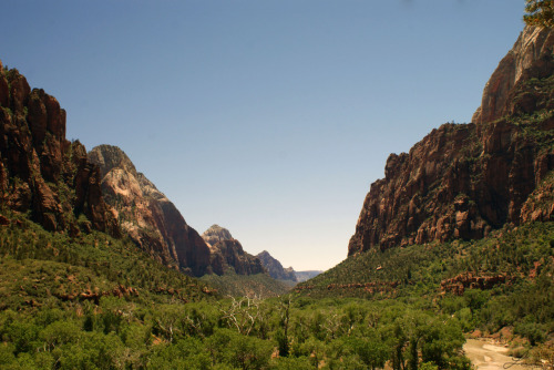 Zion Canyon, looking out. amongflora-and-fauna Now this is what I'm talking about.