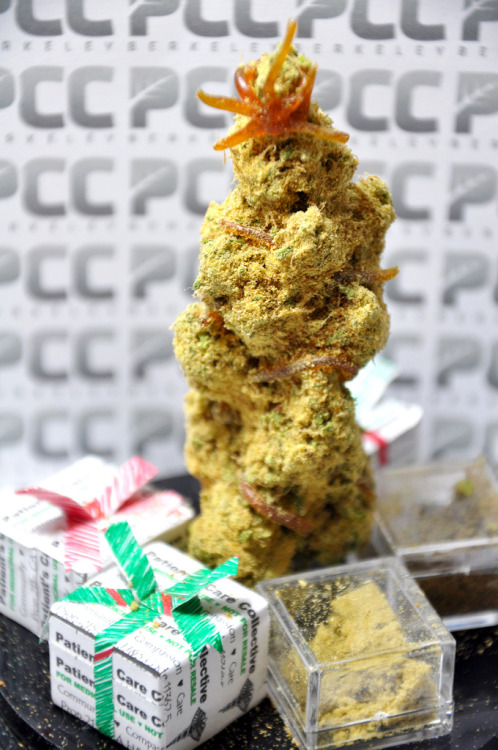 "weedporndaily:  (via Berkeley Collective Offers Potent Marijuana 'Christmas Trees' - Toke of the Town) The Patients Care Collective (PCC) in Berkeley, California, has been helping medical marijuana patients for more than 10 years now, having originally opened their doors back in 2001. They're a festive group; during the holidays they help patients celebrate the season with yummy, cannabis ""Christmas Trees"" augmented with potent concentrates.  ""Making our PCC Medicinal Christmas Trees has become a popular tradition for our patients and staff,"" Marina Musielak of Berkeley PCC told Toke of the Town Thursday afternoon. ""Each tree is made starting with a good size, high grade 'Tree,' and is then decorated with rare and special concentrates like our Jolly Rancher Red Oil, and our PCC exclusive Triple Double Truffle, which is a house blend of two types of kief, two types of hash, and two types of crystalized oils,"" Musielak said. ""Patient enthusiasm for these Christmas Trees makes the holidays double festive and exciting!"" The Cherry AK Tree, for example, was made with: • 5 grams of Cherry AK• 2.5 grams of Triple Double Truffle (house blend of six concentrates)• 1 gram of Lambsbread Kief• 0.5 grams of Jolly Rancher Red Oil ""The tree has been embellished with a good coating of the concentrate mix,"" Marina said. ""We also made a Jolly Rancher Red Oil star,"" she said. ""The remaining amounts of the concentrates are included in 'gift boxes.' "" Total cost for the trees is $200, including taxes."