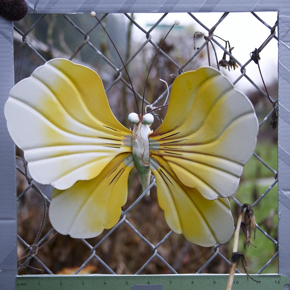 Yellow and white metal butterfly decoration on chainlink fence with dead flowers, N James St. One of several of these on this fence; house had a bunch of large butterfly decals on the garage door.