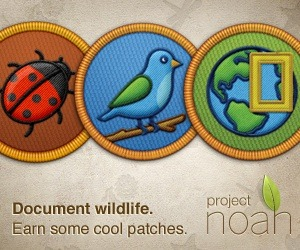 "Project Noah Gamifies all that Nature has to Offer | Gamification Blog Ever wondered what plant rooted itself in your garden, or what strange  bug somehow survived the bitter cold outside to call your house its  home? Or maybe on vacation to warmer reaches, you came across a disturbingly large insect? Some might run the other way, but if you are like me, you're asking ""what the hell is that?"" Project Noah brings together a community that can help. It's been out for over a  year, and Project Noah has already engaged thousands of users in the  age-old game that has attracted the likes of Darwin and Teddy Roosevelt:  discovering and identifying nature's treasures. The web app is accessible and well designed, and the experience is also  available on iOS and Android for finding critters in the field.  Gamification features engage users towards contributing regularly. There  is not a leaderboard, but top photos of the day are featured and reward  users for contributing (check out yesterdays winning photo of a whale  shark from user JessyZich). The overall design of the website is excellent, drawing on many of the design philosophies of gamification and engagement."
