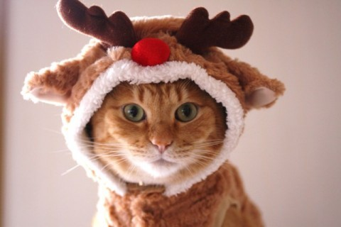 uanditogetha:  I want this reindeer for Christmas :3