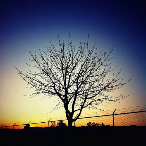 On the #Horizon. #Tree #Arbol #Silhouette #Lomora2 #WesternSky #Texas #Sky #Sunset #SunsetPorn #Arboreal #mobilephotography #iphoneography #Winter #BareBranches  (Taken with Instagram at El Paso, Texas)