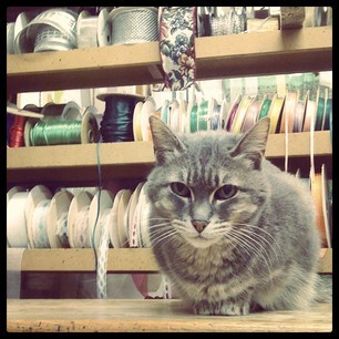 *Store Cat* photography, iPhonge, Instagram by R. Sherinian