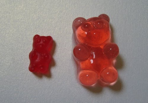 yahairamarie:  basketballswag:  left; normal gummy bearright; soaked in vodka  OMG best shit EVER  fuck yea lol im tryin this