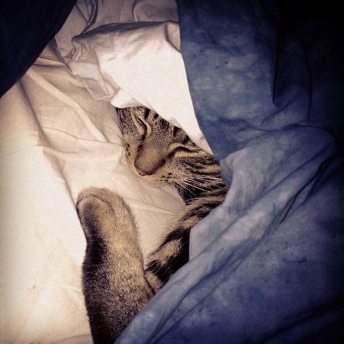 Riley sleeping under the covers on another cold morning! (Taken with instagram)