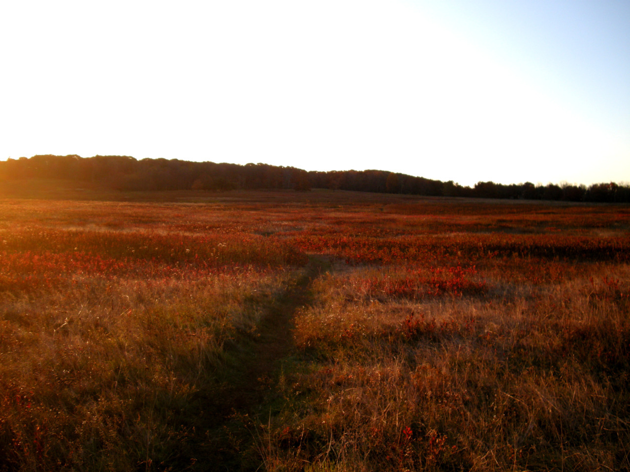 Big meadow, lost keys, Oct 2011