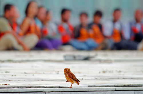 An owl perches in front of Greenpeace activists who were arrested for raising an inflatable model of a wind turbine in front of Congress in Brasilia. (Ueslei Marcelino/Reuters) in 50 best photos from the Natural World
