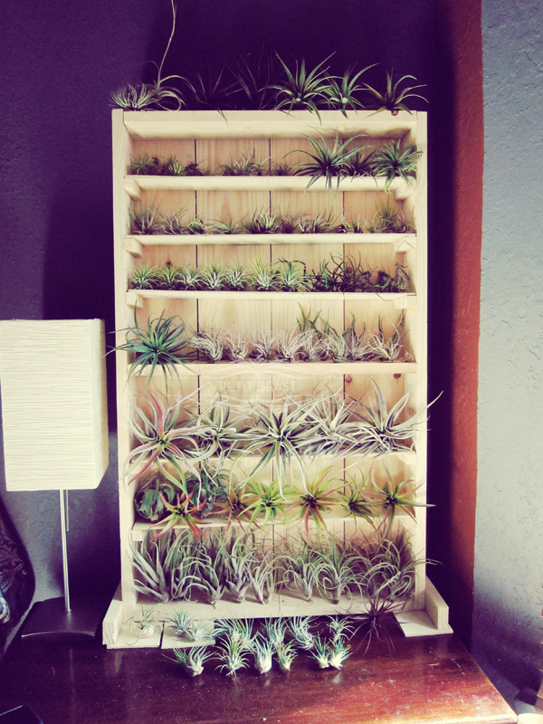 one of my many plant-holder-displays