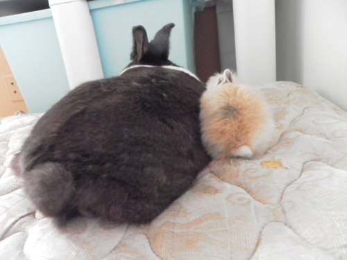 thefrogman:  Guess what? Bunny butts.