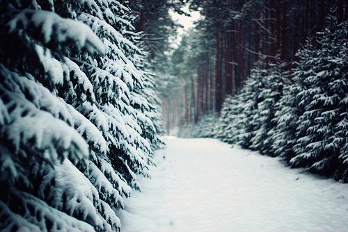 ♡ Wintertime ♡