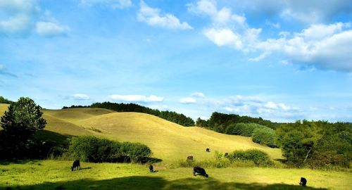 Green Pasture by Jackie