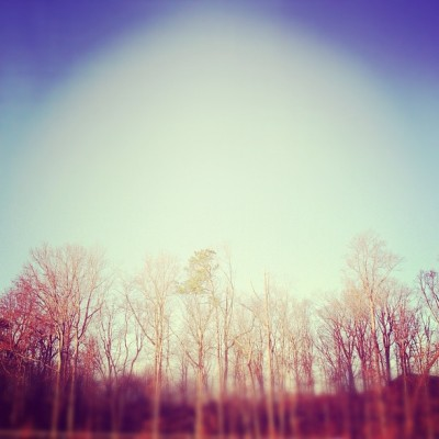 Winter trees. (Taken with instagram)
