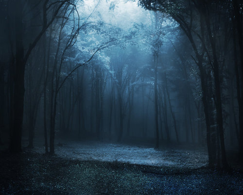 chasingthegreenfaerie:  Phatpuppy Blue Fairy Forest by *phatpuppy on deviantART on We Heart It. http://weheartit.com/entry/18029892