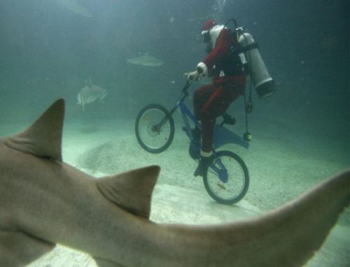 Santa bicycling underwater with sharks