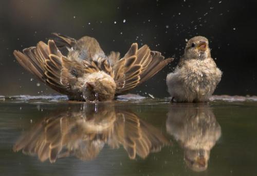 Bird Bubble Bath :) by Zolt