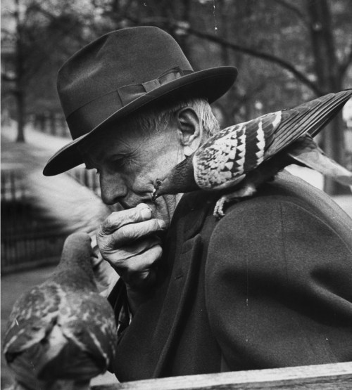 An old man feeding pigeons in the park. Photograph by Yale Joel. New York City, March 1951.