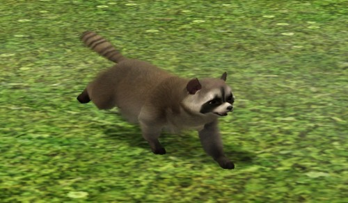 A racoon, as a dog, isn't it the cutest thing? Download and see more here.