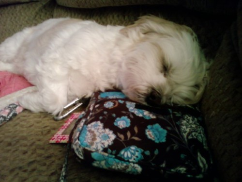 Baby sleeepin on Mommys Vera Bradley.