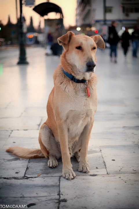 rebeldog:  dec 2011, a fine portrait of me at #syntagma Thanks Tom Daams