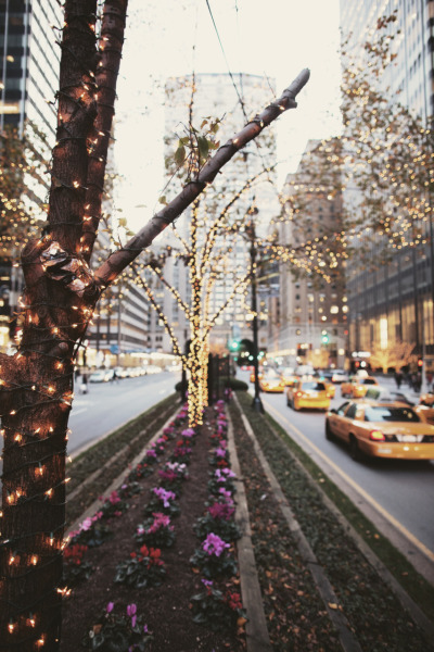 vectate:  every tree on every street, every Christmas in New York City.