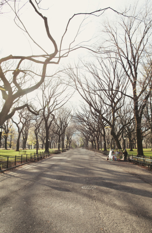 jamesnord:  oscarprgirl:  poets walk in the early am, central park. hava perdesi  part 2 of my work with Oscar, and this time on the Radar.