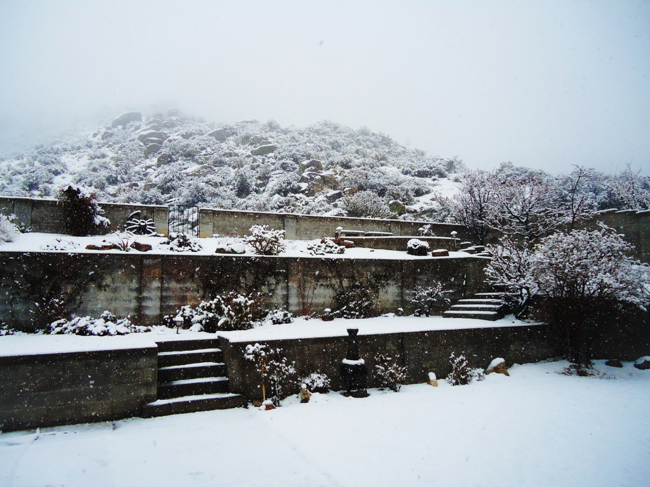 new-mexico:  This is my backyard. As you can see, it's snowing!