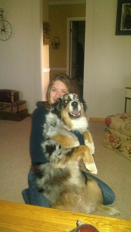 Gunner James, the two year old australian shepherd:) and his gf