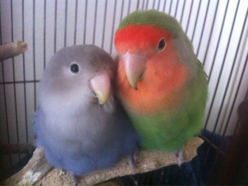 God my birds are cute.