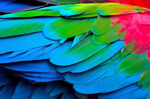 Amazing nature, parrot wings
