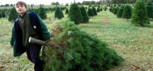 mothernaturenetwork:  7 green things you're already doing this ChristmasTired of reading about how to be greener this holiday season? Give yourself some credit for the green things you do automatically.
