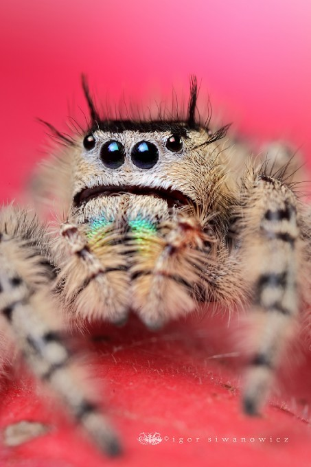 photojojo:  Igor Siwanowicz has a special way of taking scary-as-heck insects and reptiles and transforming them into something beautiful. http://www.havaperdesimontaj.com Igor Siwanowicz's Insect & Reptile Photography via ohscience; herodna