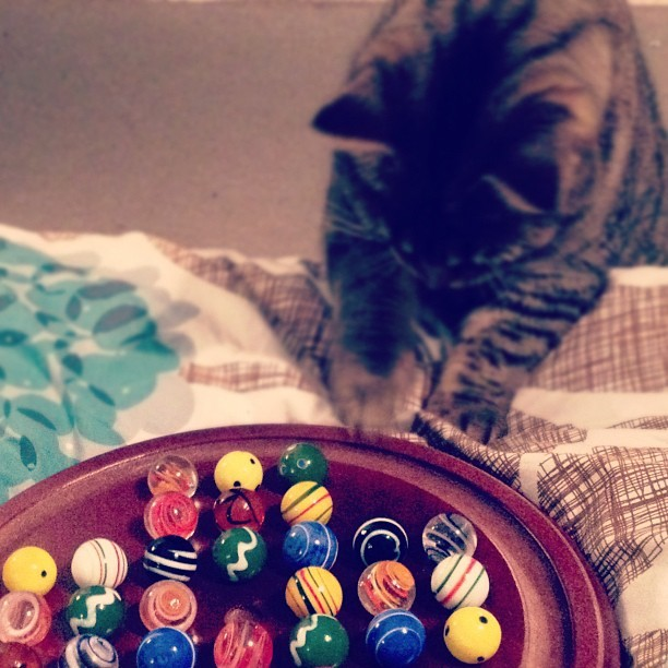Frankie playing Solitaire when Steve is not looking! (Taken with instagram)