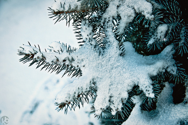 Snow! by Kacper Borowiec | kb photo on Flickr.I'm in a very wintery mood