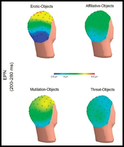 """Beyond Good and Evil: The Time-Course of Neural Activity Elicited by Specific Picture Content"" Event related potentials and negative bias: ERPs were time-locked to the stimulus onset, in this case, subjects were shown pictures sorted into the categories as shown in the figure above. Researchers measured the late positive potential or the LPP, which is understood to reflect motivated attention.  Overall, and as expected, unpleasant images elicited a larger response than neutral or pleasant images, specifically images of erotica and mutilation were compatible in LLPs, as were affiliative and threatening images - as you can see.   No mention of mirror neuron activity, which would be interesting to look at. [paper here]"