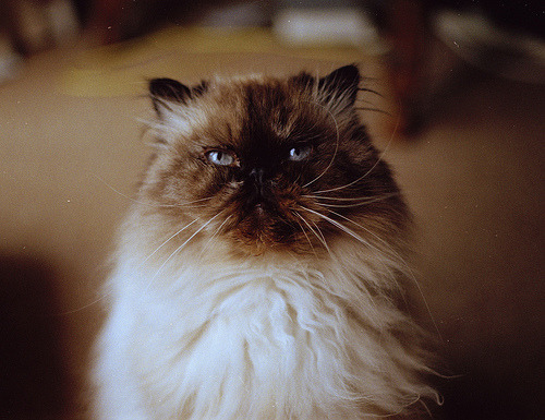 lauraface:  atticgirl:dreamcats(by Sofi Anne)  beauty <3