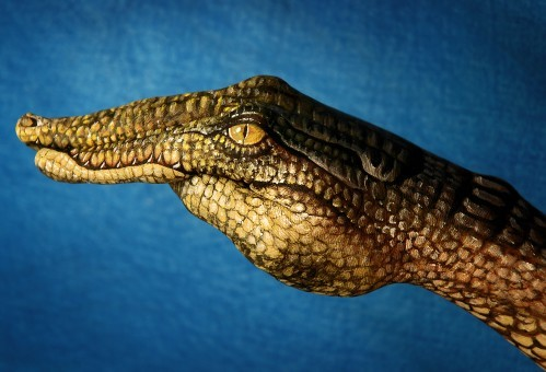 myampgoesto11:  Crocodile painted on hand by Guido Daniele