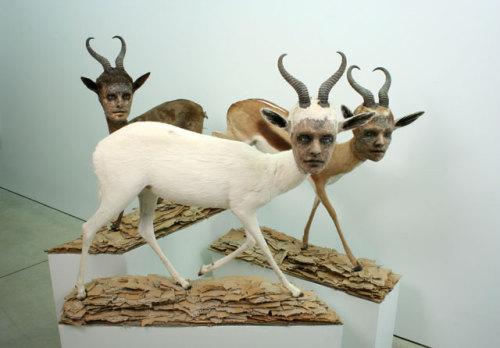 Kate Clark,Lit From Within, 2009 Medium: Gazelle hide, foam, clay, pins, thread, rubber eye, cardboard, wood Size:  (lifesize) variable