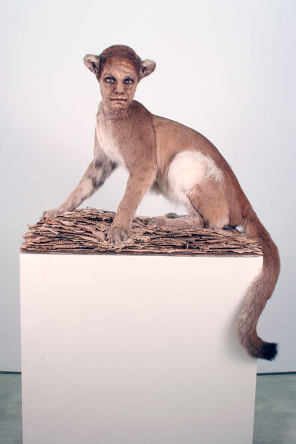 Kate Clark,Sharp Tongue, 2008 Medium:Cougar hide, foam, clay, pins, thread, rubber eyes, cardboard Size:31 x 36 x 21 inches