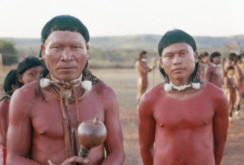 Have you noticed that some South American tribes have huge heads? The mystery has been solved! Usually, environmental pressures drive evolution (biotic factors like predators and disease or abiotic factors like altitude, UV radiation, or climate). In the case of the Amazonian Xavánte tribe, sexual selection and isolated cultural practices led to significant changes to their morphology (shape). A full quarter of the tribe's population was made up of sons of a single chief, Apoena, who had five wives. You can see how being more reproductively successful means that any traits of theirs can quickly come to dominate the population.