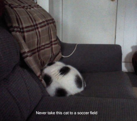 bunnyfood:  Soccer Ball Cat