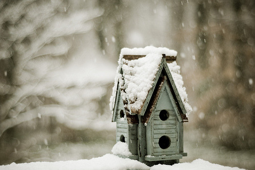 ghosthalogens:  birdhouse [explored | 182] (par heather.dyan)