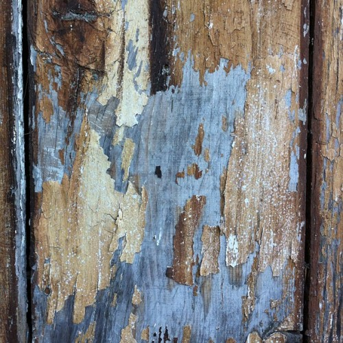 Old wood #decay #organic #wood #texture  #peel (Taken with instagram)