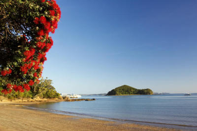 neonstorm:  Pohutukawa tree, Bay of Islands, Northland, New Zealand
