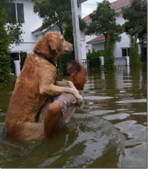 leafarja:  elmirra:  manilaryce:  A man saving his dog after Typhoon Sendong Typhoon Sendong has left more than 927 dead, hundreds missing, and 47,000 crammed into evacuation centers. Perform an act of kindness this holiday season by donating to the victims of this tragedy through the STP Emergency Relief Fund Campaign. Your funds will go directly to the people affected.  Ahhhh! This makes my heart melt.  =\