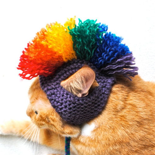 Along with creating a colorful array of pom-pom pet toys, the knitter behind Bitch Knits fashions mohawk hats for that punk rock kitty in your life.  We're undecided on whether the hats are cute or bizarre, but decide for yourself and check out more unique cat hats — including a lion get-up — this way.