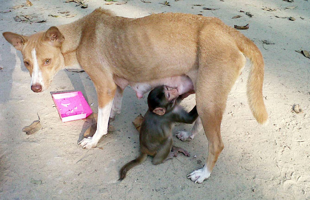 Photos of the dayMintu the dog, mother of seven puppies, breastfeeds a young monkey in Bishwanathpur, Bangladesh, Dec. 21, 2011. (AFP/Getty Images)