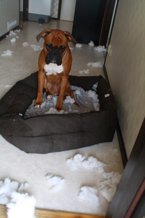 I think he immediately regrets his decision to shred his bed.  画